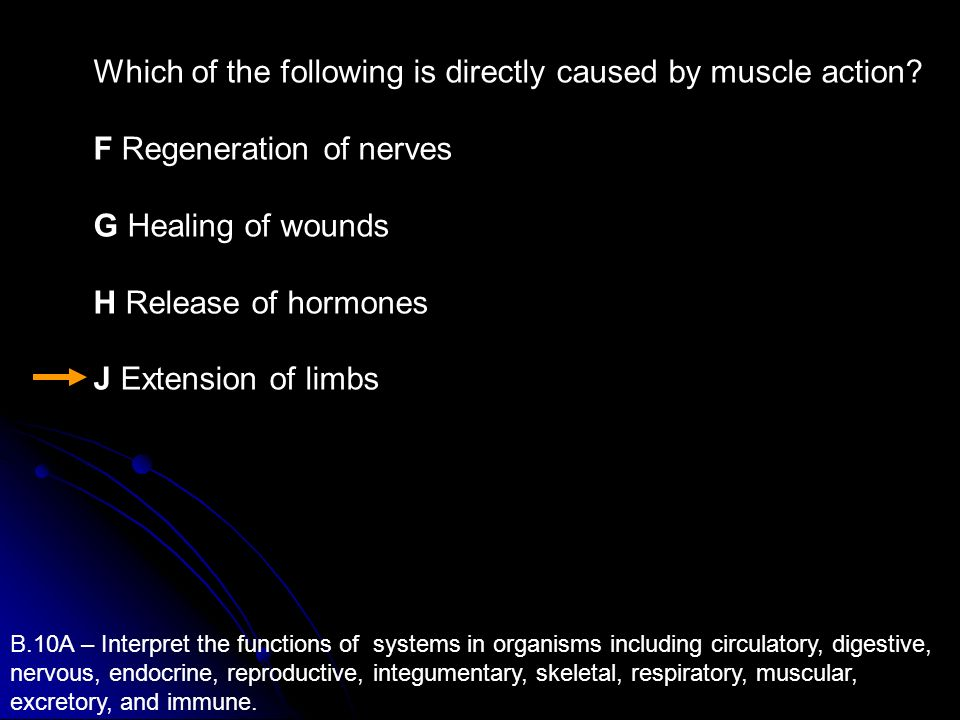 Which of the following is directly caused by muscle action