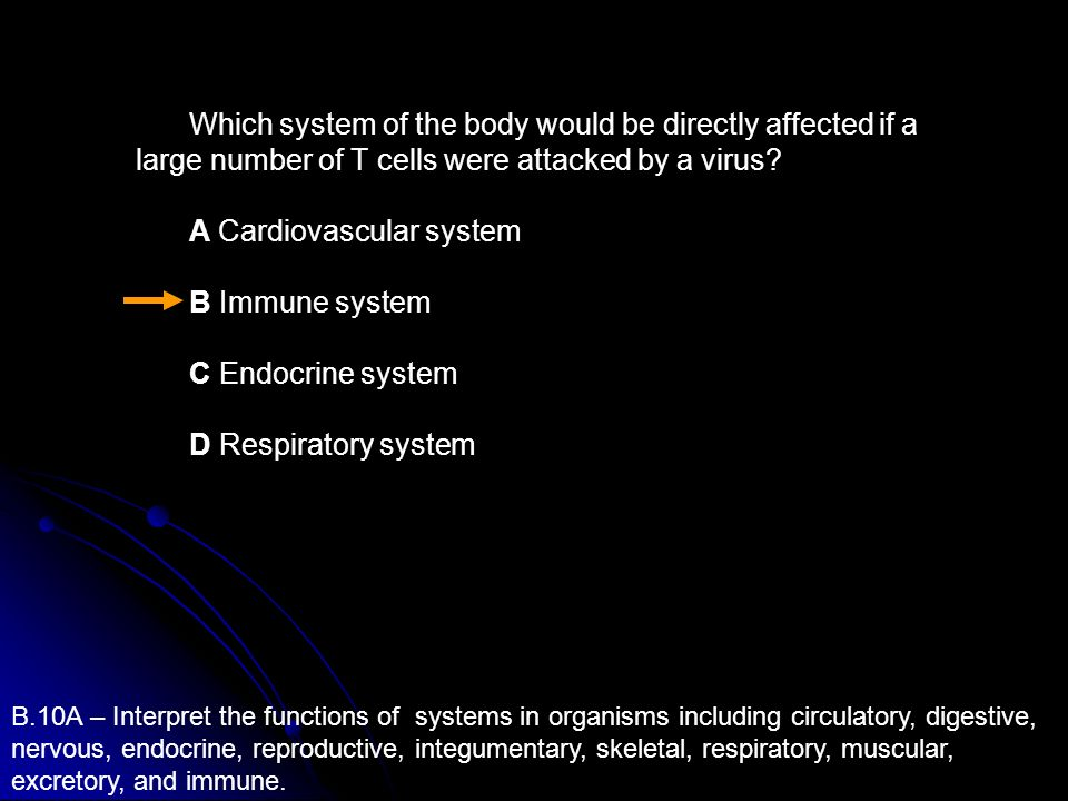 A Cardiovascular system B Immune system C Endocrine system