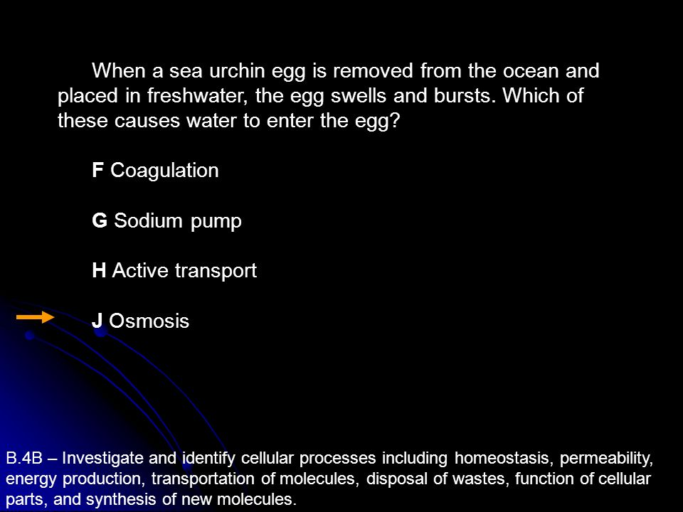 When a sea urchin egg is removed from the ocean and placed in freshwater, the egg swells and bursts. Which of these causes water to enter the egg