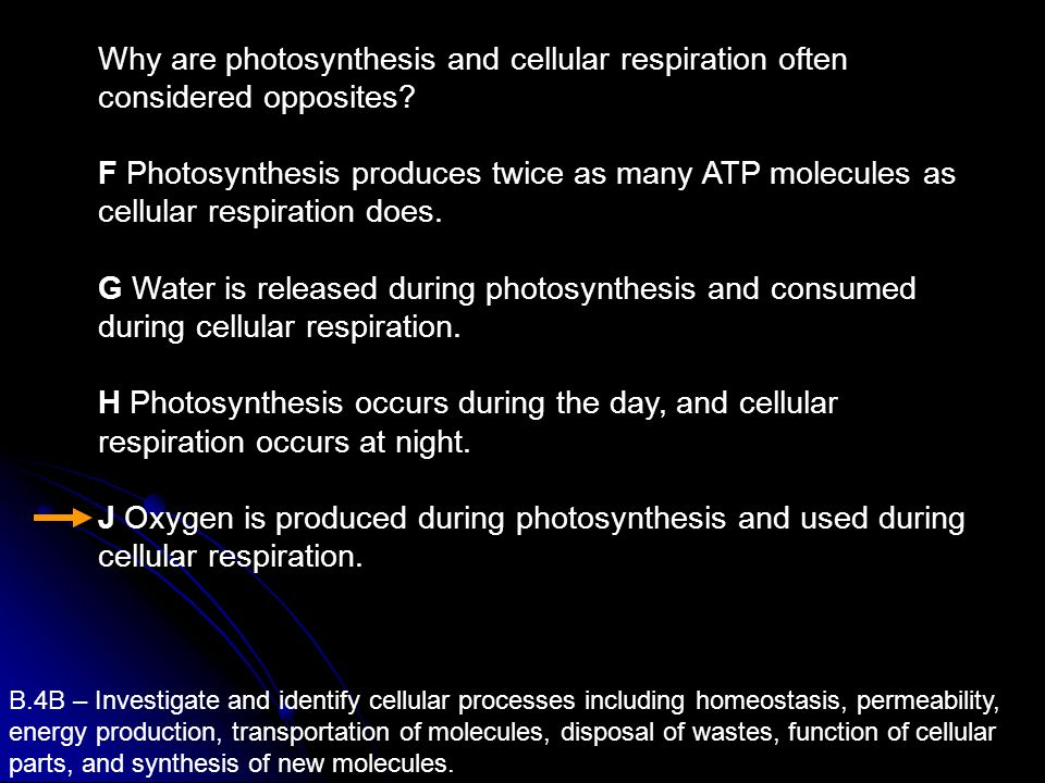 Why are photosynthesis and cellular respiration often considered opposites