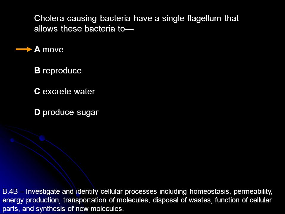 Cholera-causing bacteria have a single flagellum that allows these bacteria to—