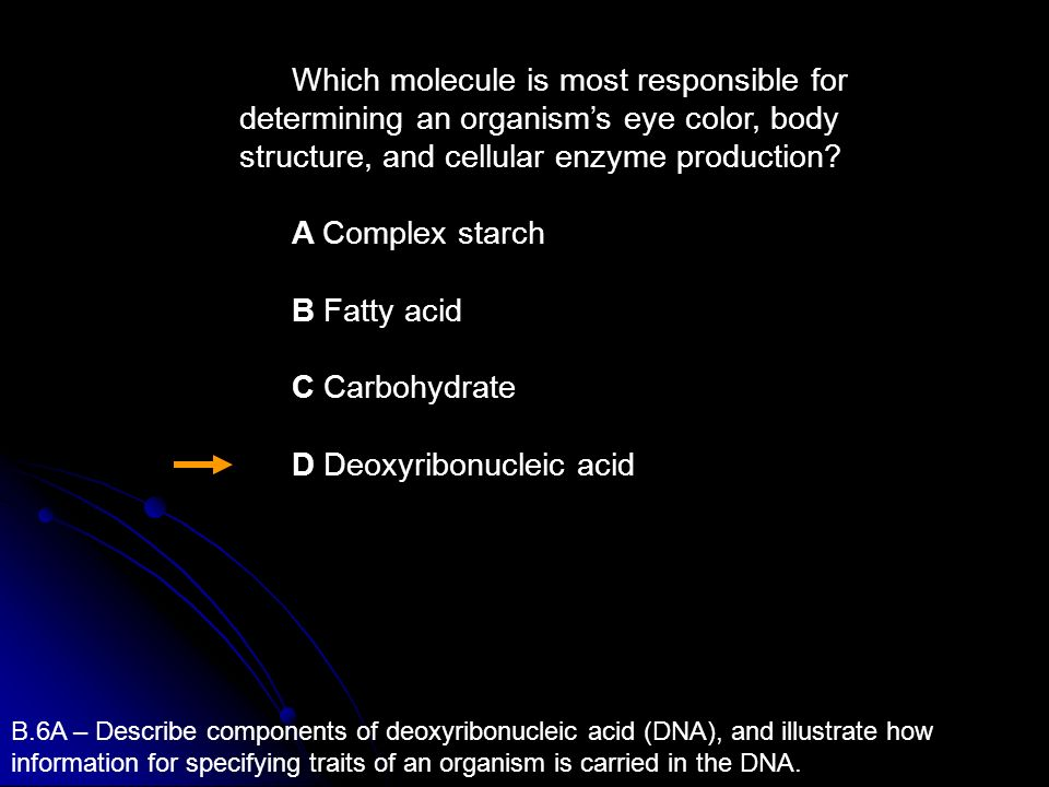 D Deoxyribonucleic acid