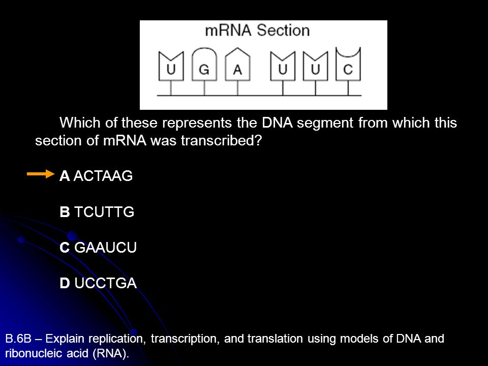 Which of these represents the DNA segment from which this section of mRNA was transcribed