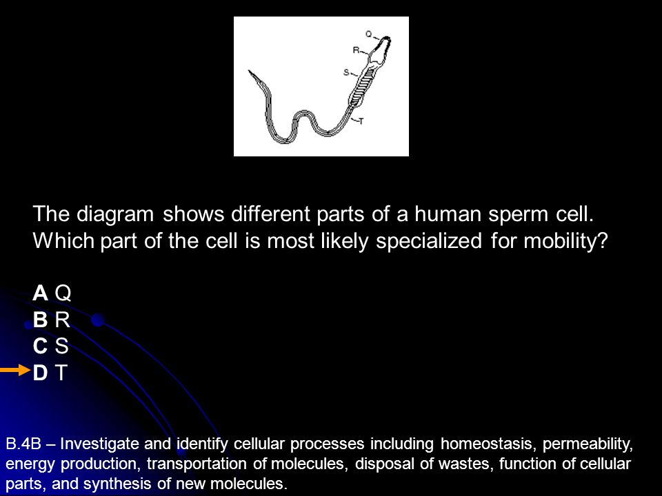 The diagram shows different parts of a human sperm cell