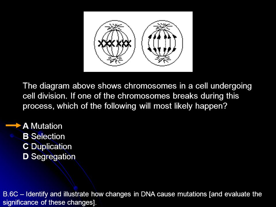 The diagram above shows chromosomes in a cell undergoing cell division
