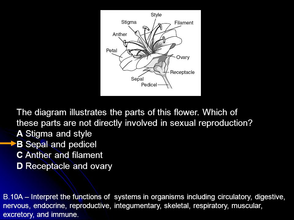 The diagram illustrates the parts of this flower