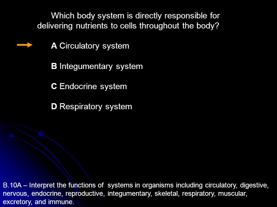 B Integumentary system C Endocrine system D Respiratory system