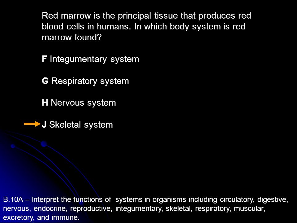 F Integumentary system G Respiratory system H Nervous system