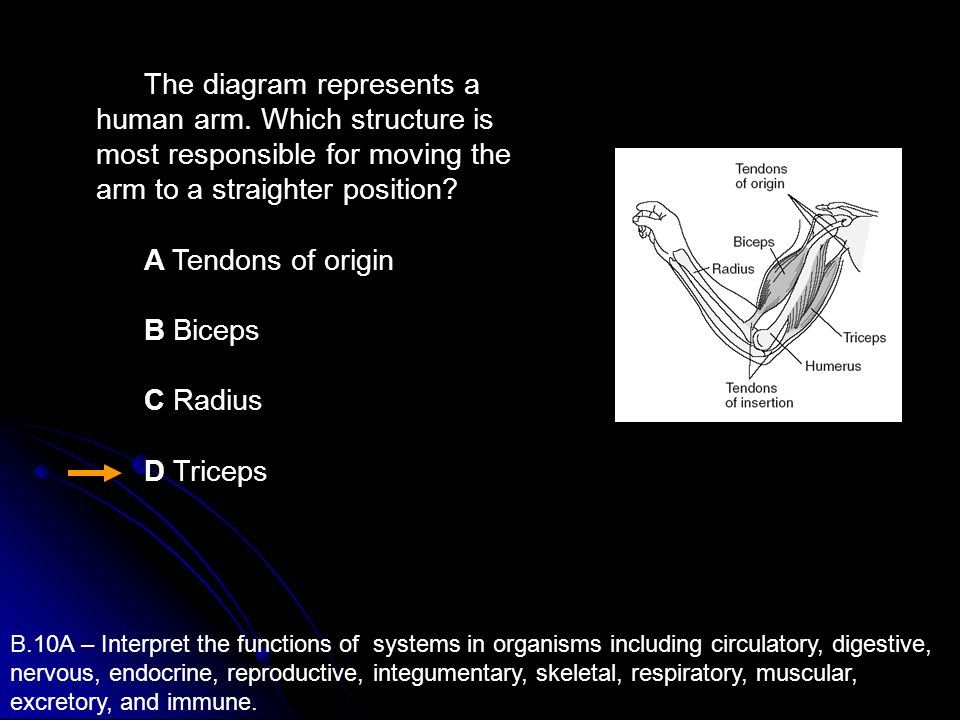 The diagram represents a human arm