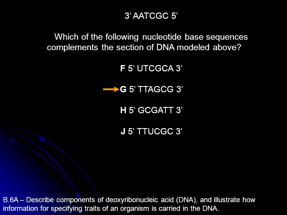 3' AATCGC 5' Which of the following nucleotide base sequences complements the section of DNA modeled above