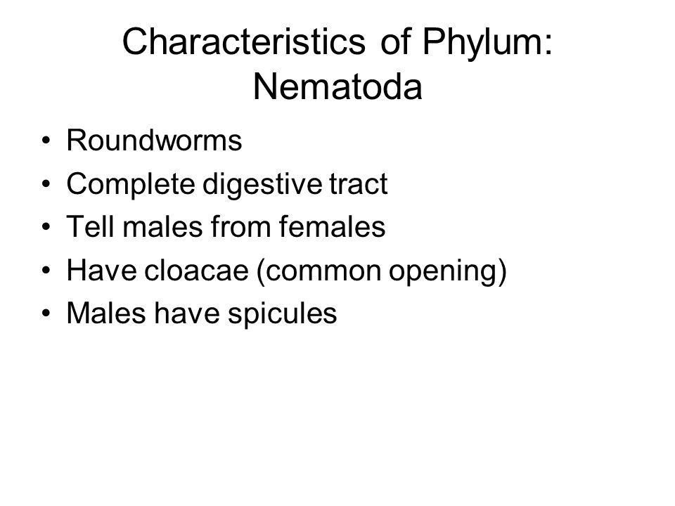 Characteristics of Phylum: Nematoda