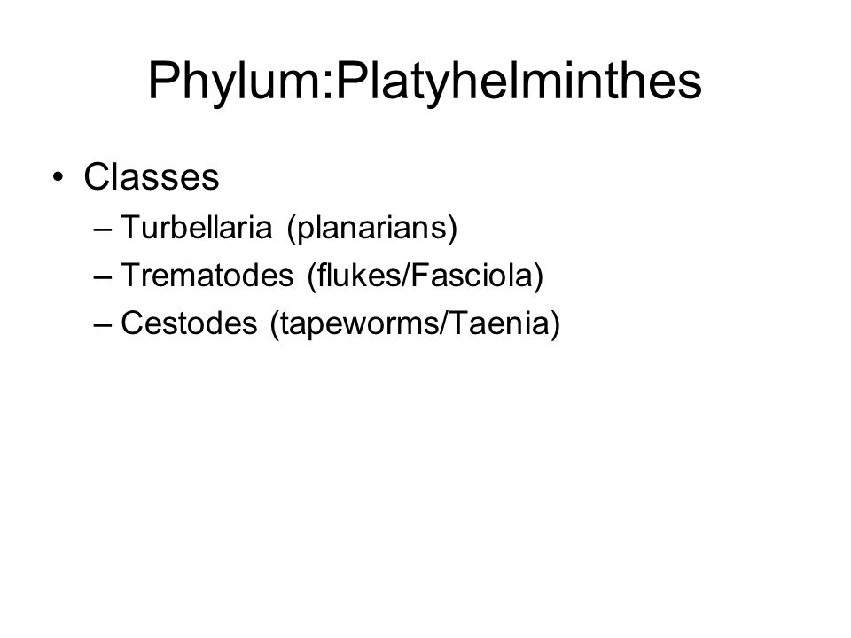 Phylum:Platyhelminthes