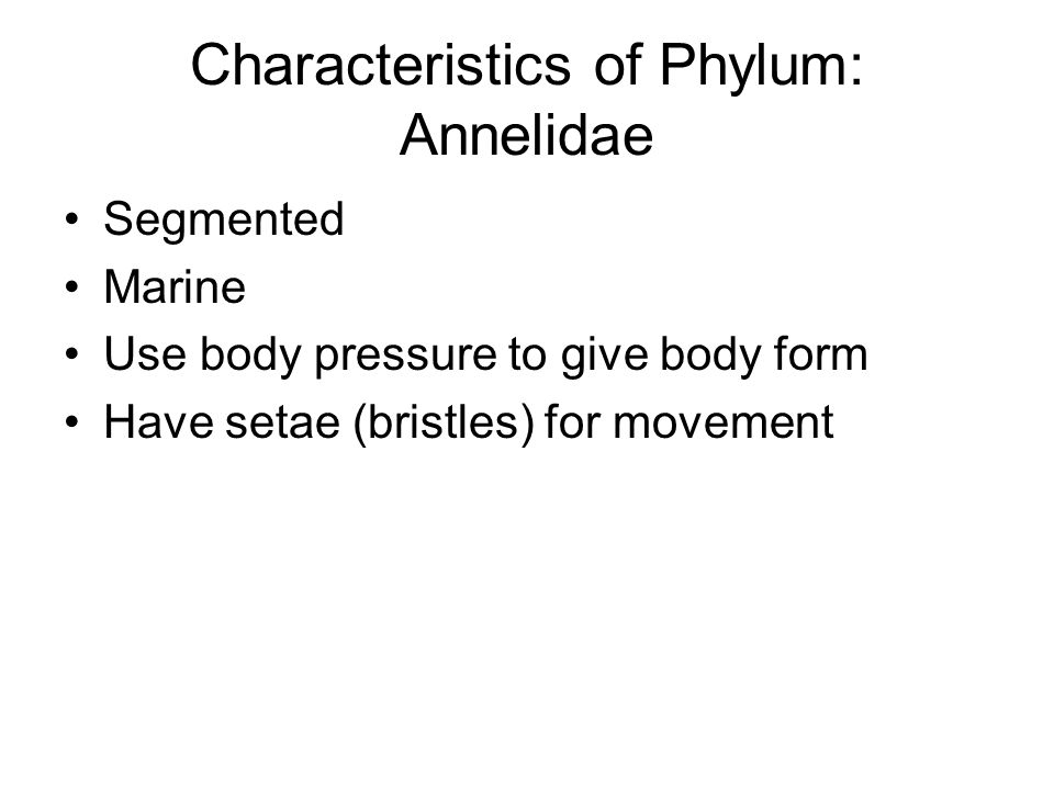 Characteristics of Phylum: Annelidae