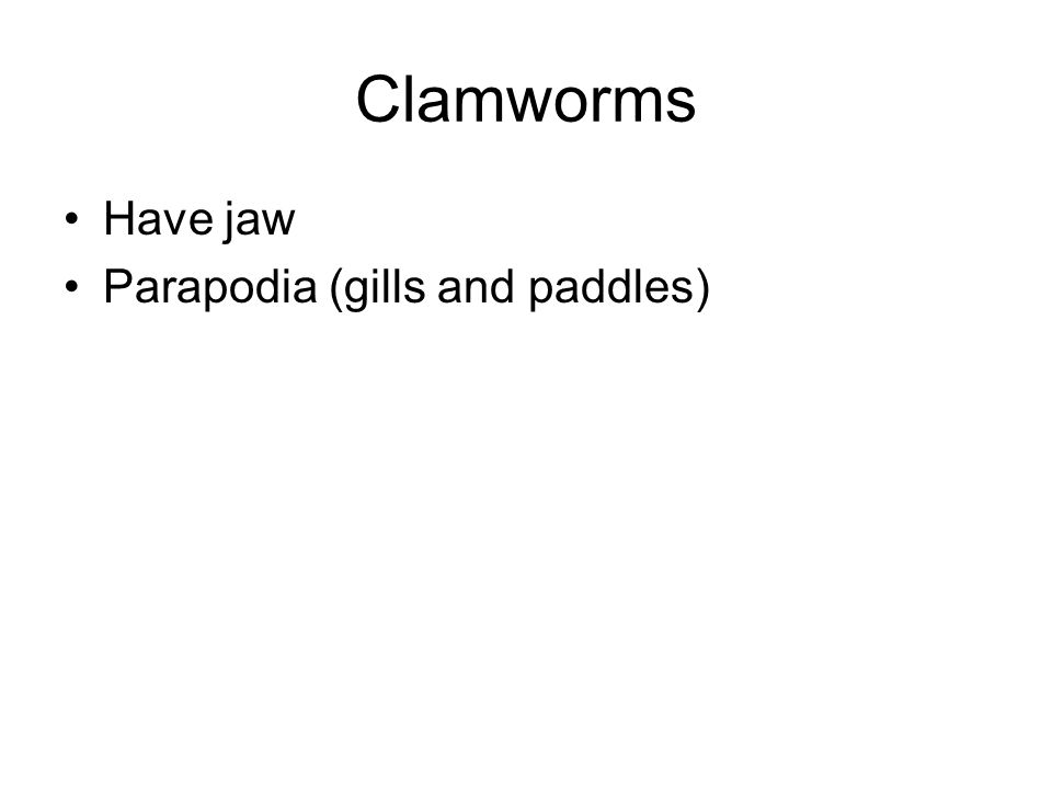 Clamworms Have jaw Parapodia (gills and paddles)