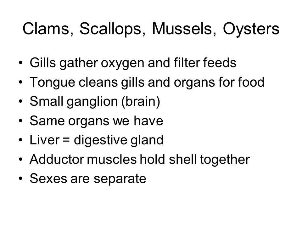 Clams, Scallops, Mussels, Oysters