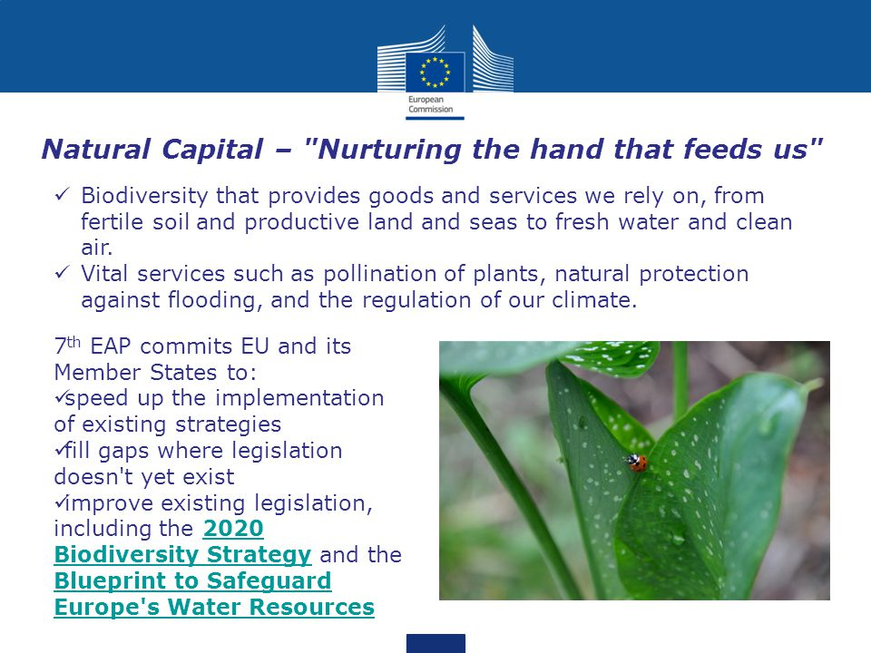 Natural Capital – Nurturing the hand that feeds us