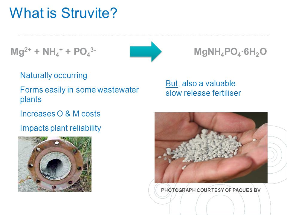 What is Struvite Mg2+ + NH4+ + PO43- MgNH4PO4∙6H2O