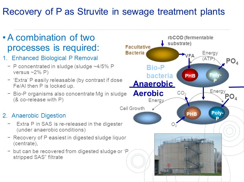 Recovery of P as Struvite in sewage treatment plants