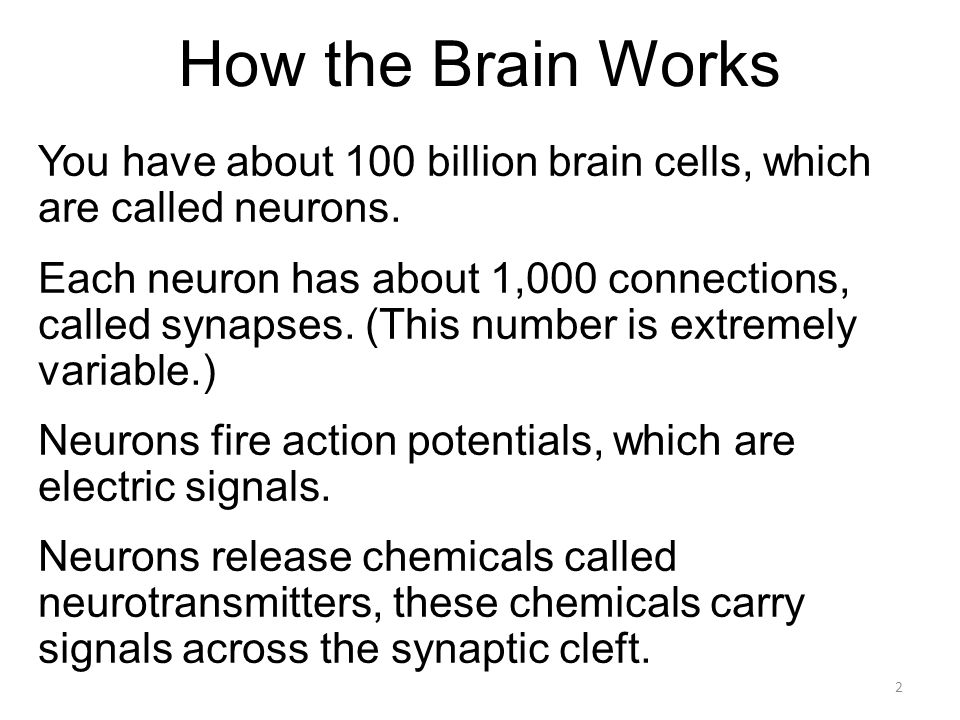 How the Brain Works You have about 100 billion brain cells, which are called neurons.