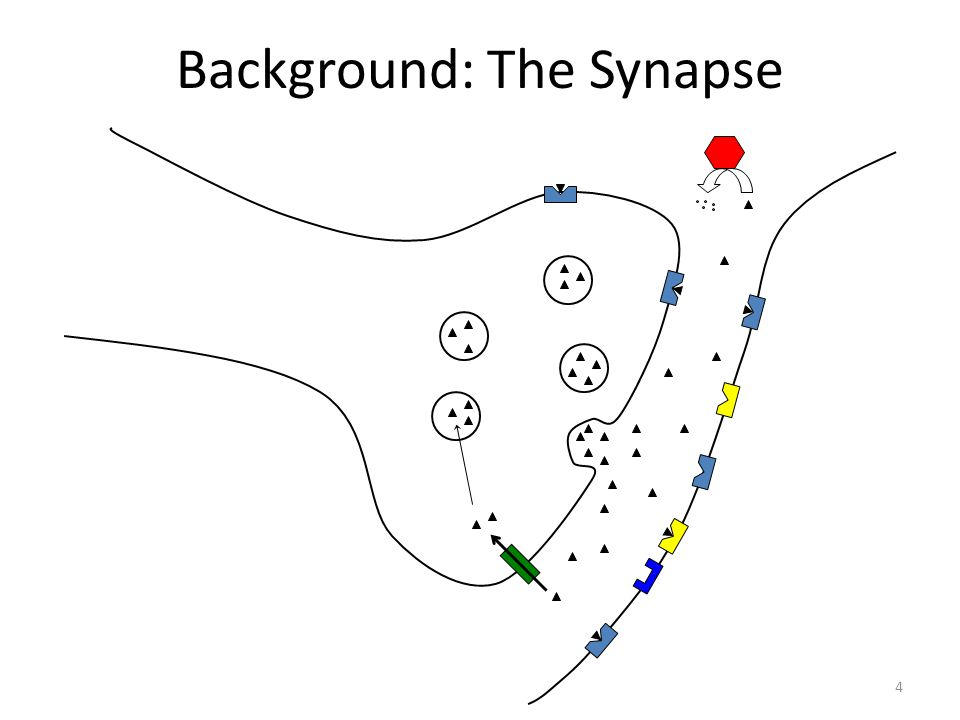 Background: The Synapse