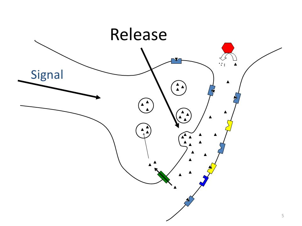 Release Signal