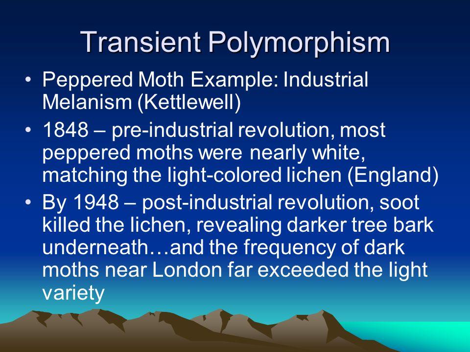 Transient Polymorphism