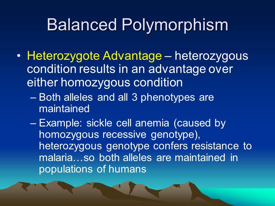 Balanced Polymorphism