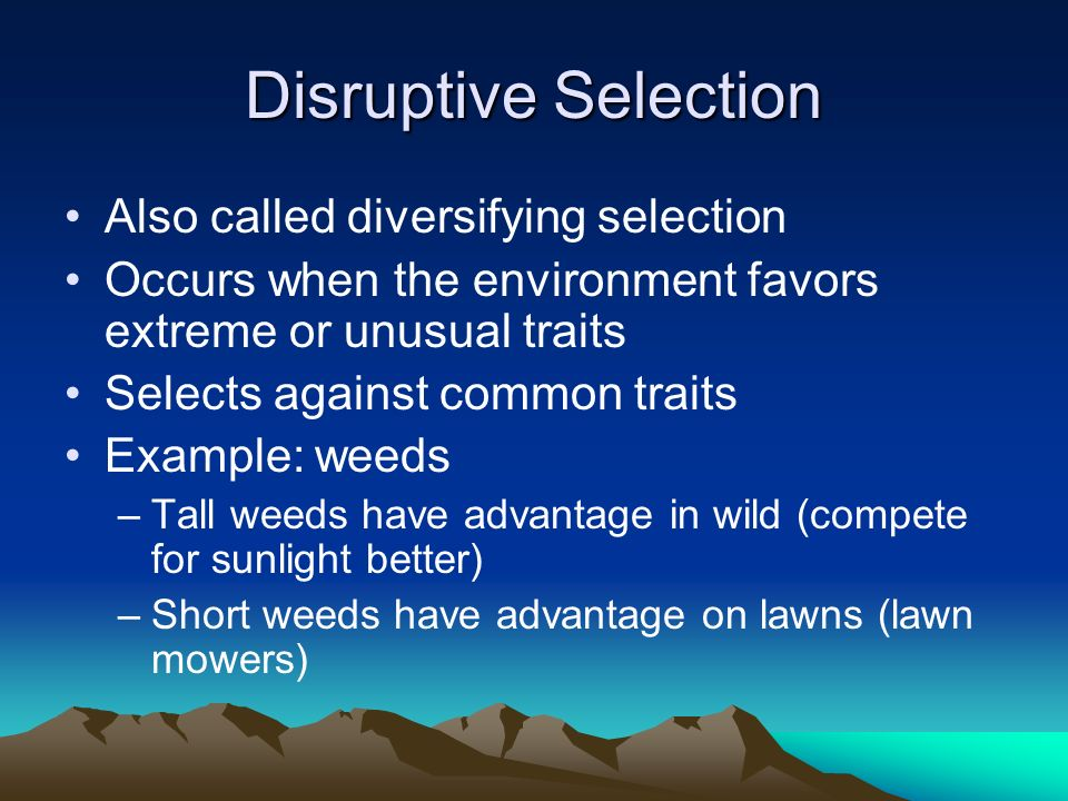 Disruptive Selection Also called diversifying selection