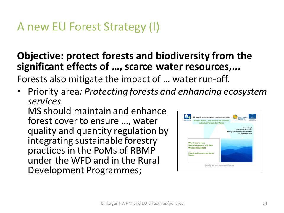 A new EU Forest Strategy (I)