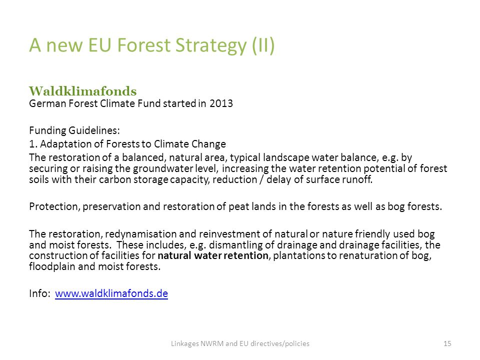 A new EU Forest Strategy (II)