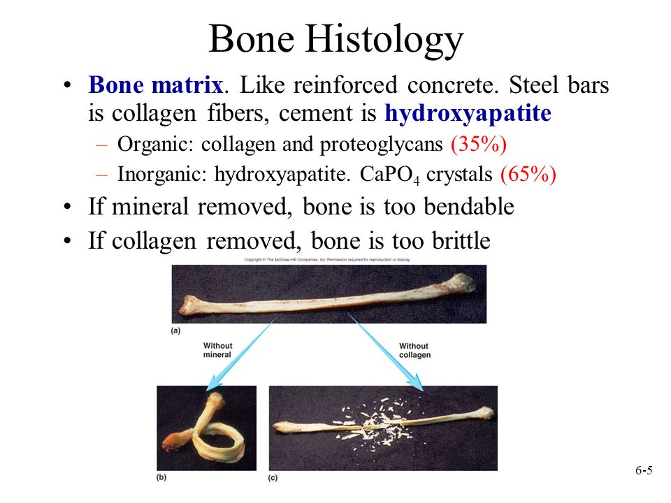 Bone Histology Bone matrix. Like reinforced concrete. Steel bars is collagen fibers, cement is hydroxyapatite.