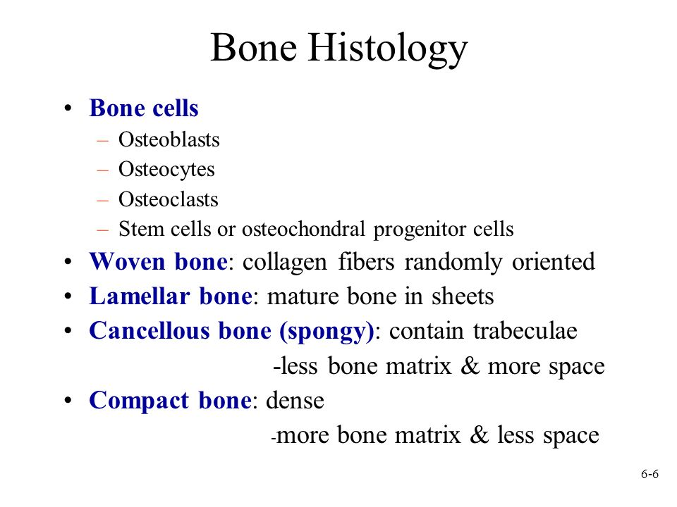 Bone Histology Bone cells