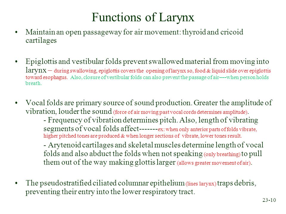 Functions of Larynx Maintain an open passageway for air movement: thyroid and cricoid cartilages.