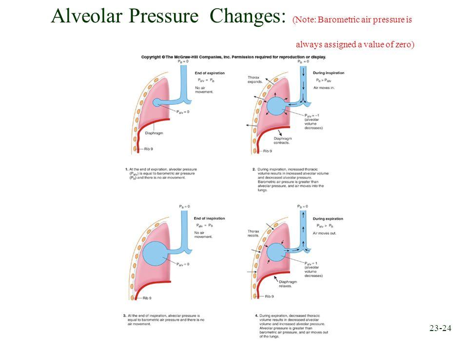 Alveolar Pressure Changes: (Note: Barometric air pressure is