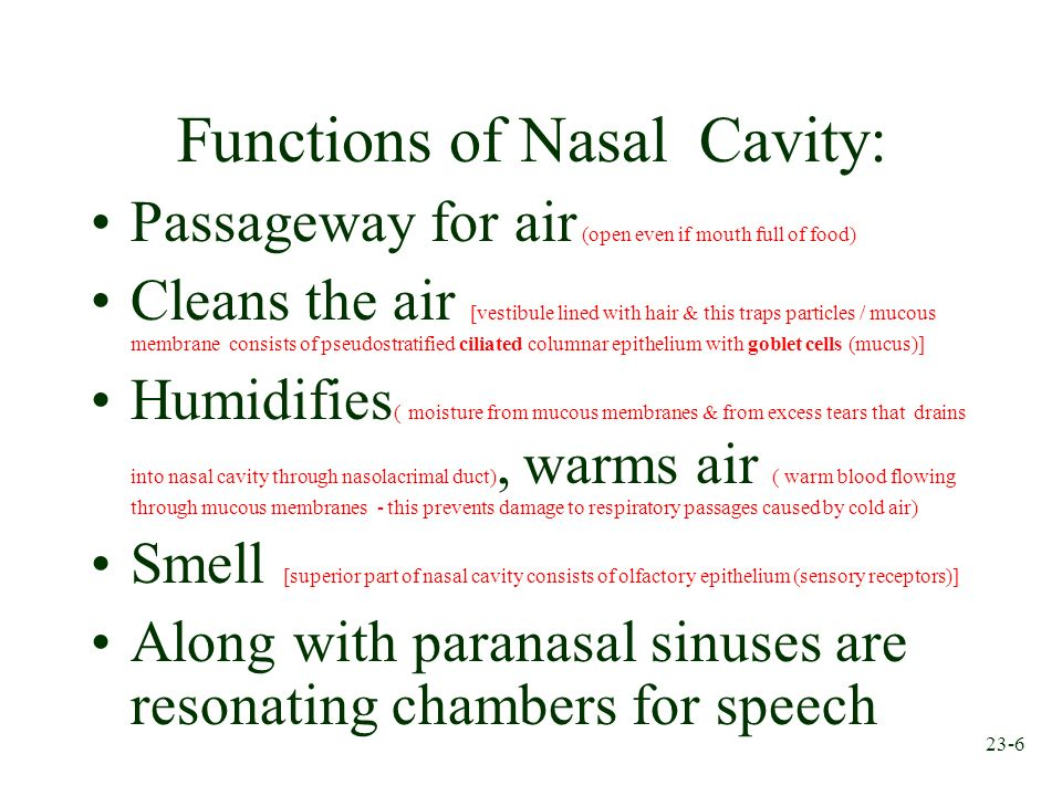 Functions of Nasal Cavity: