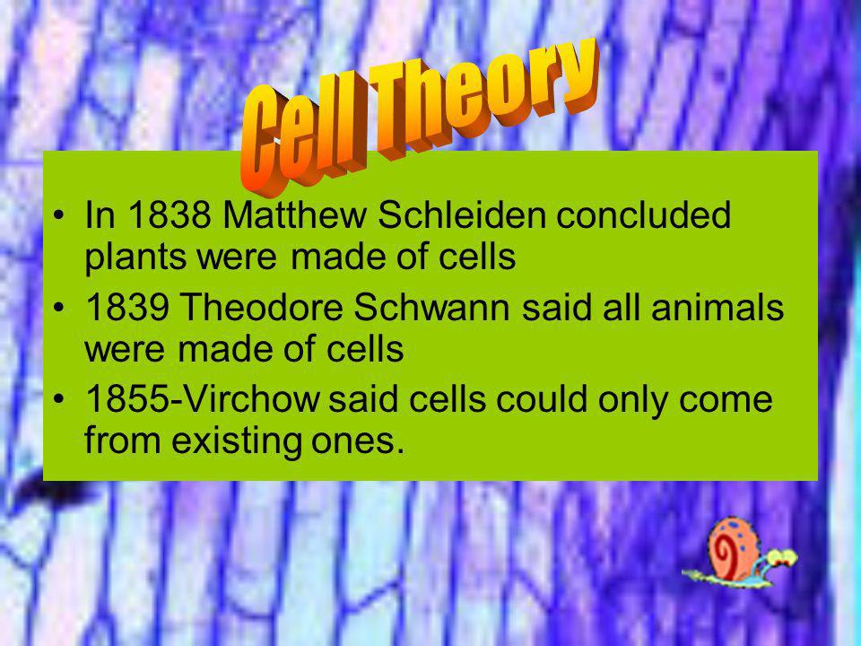 Cell Theory In 1838 Matthew Schleiden concluded plants were made of cells. 1839 Theodore Schwann said all animals were made of cells.