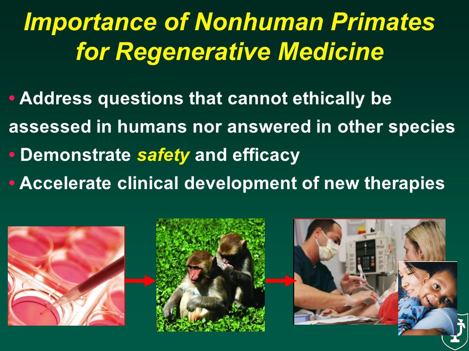 Importance of Nonhuman Primates for Regenerative Medicine
