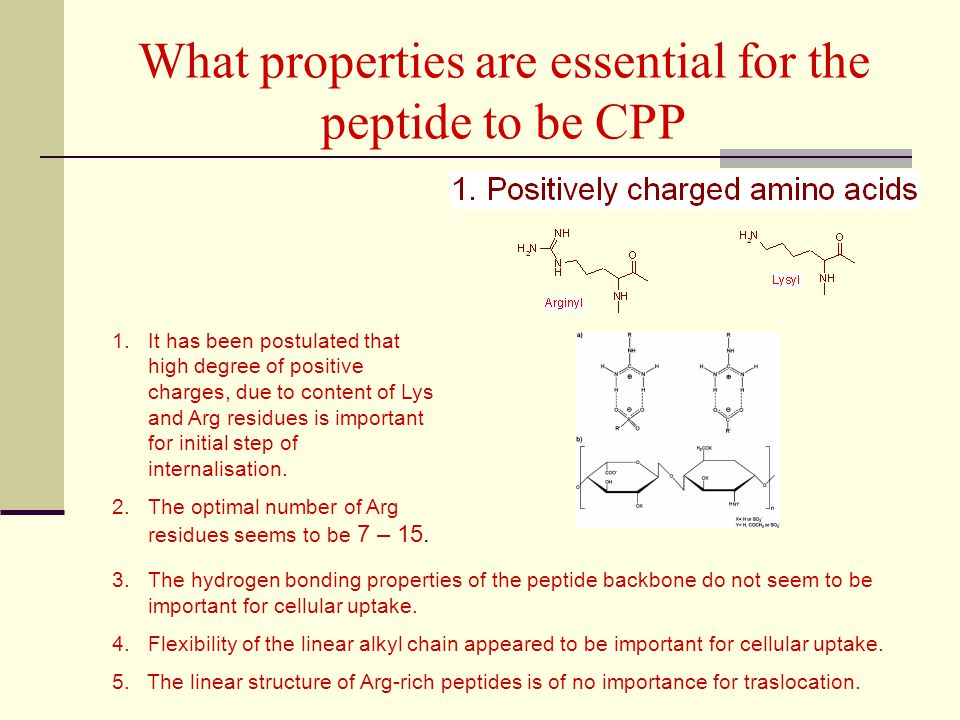 What properties are essential for the peptide to be CPP