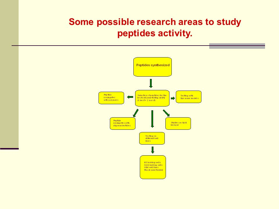 Some possible research areas to study peptides activity.