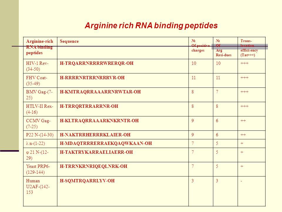 Arginine rich RNA binding peptides