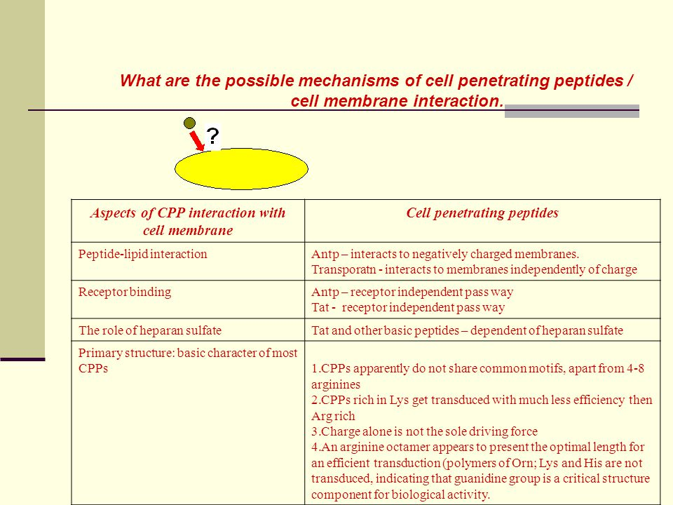 What are the possible mechanisms of cell penetrating peptides /