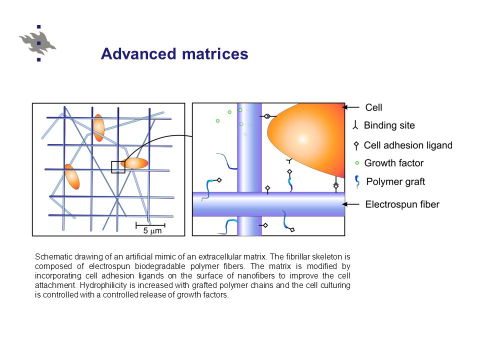 Advanced matrices