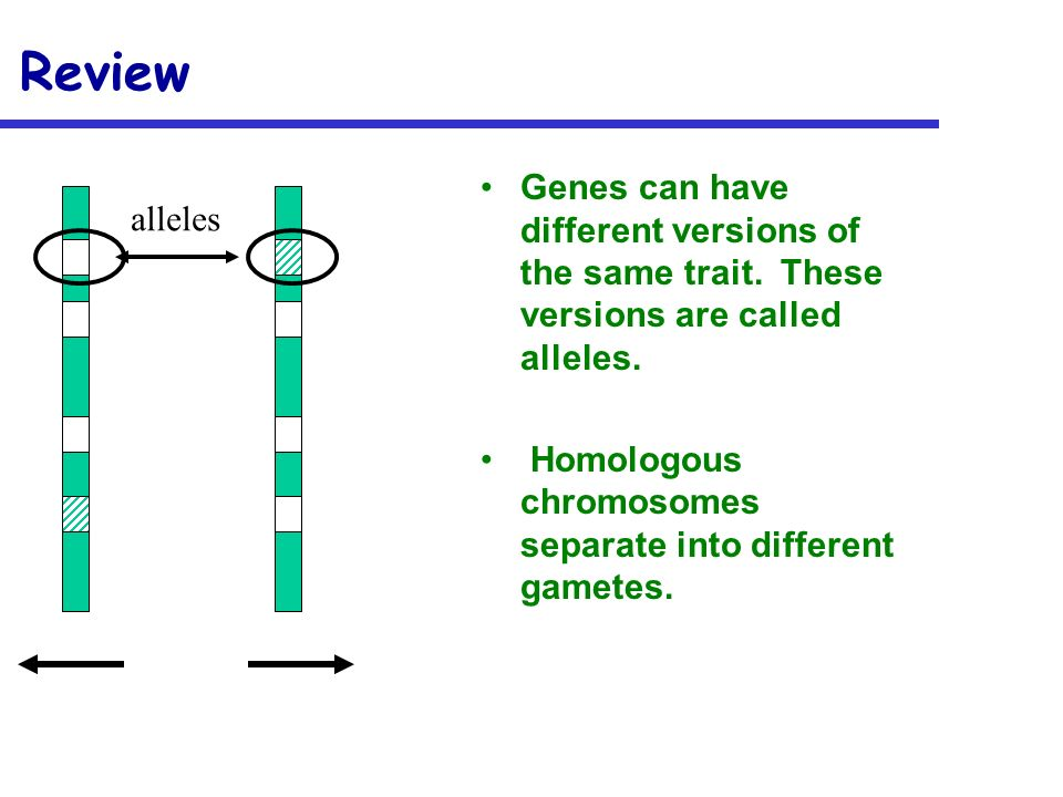 Review Genes can have different versions of the same trait. These versions are called alleles.