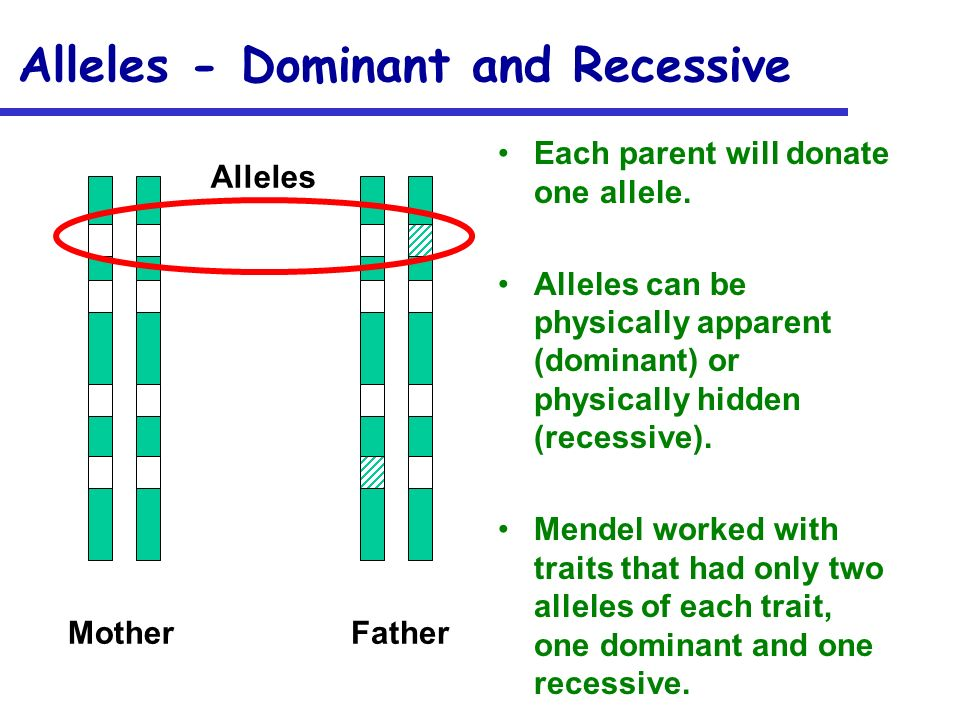 Alleles - Dominant and Recessive