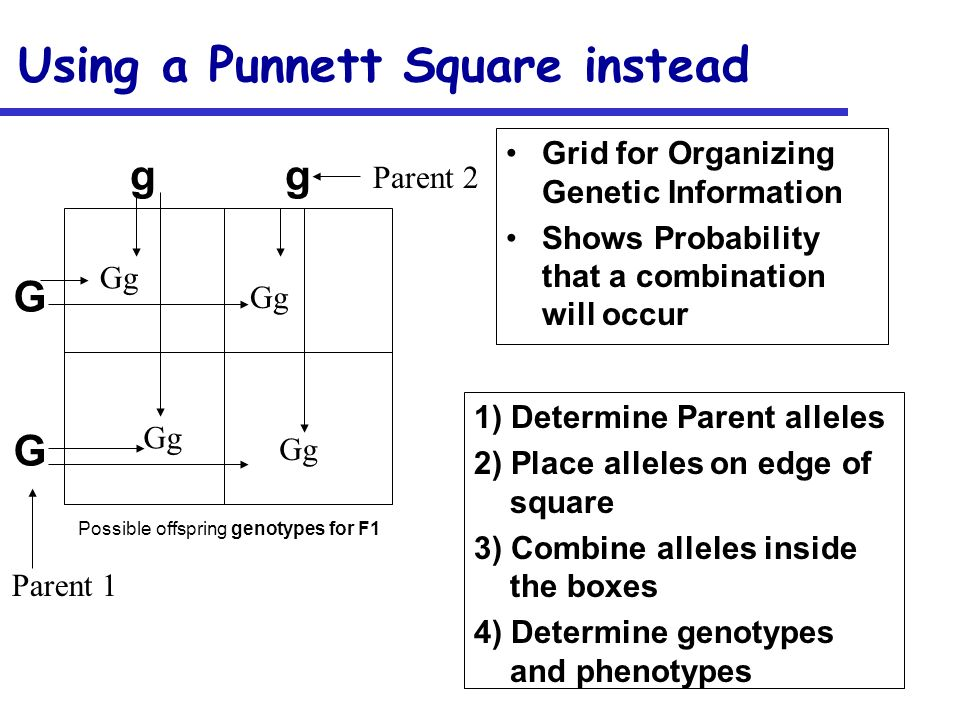 Using a Punnett Square instead
