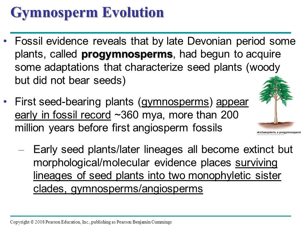 Gymnosperm Evolution