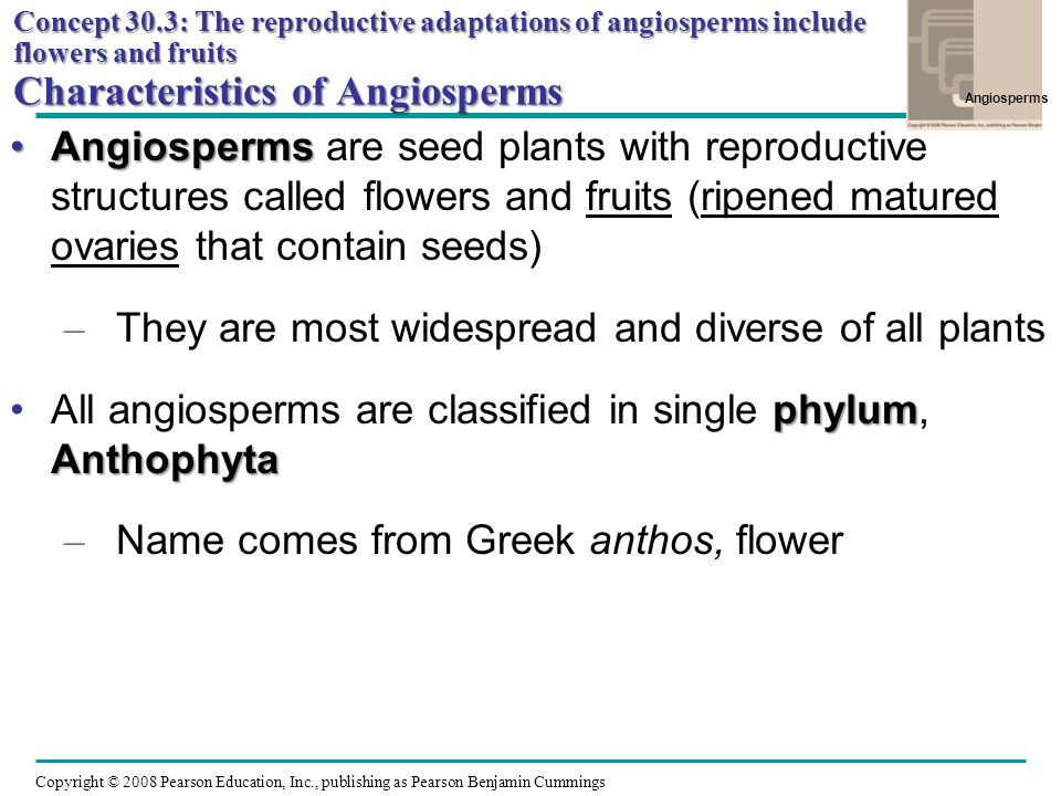 They are most widespread and diverse of all plants