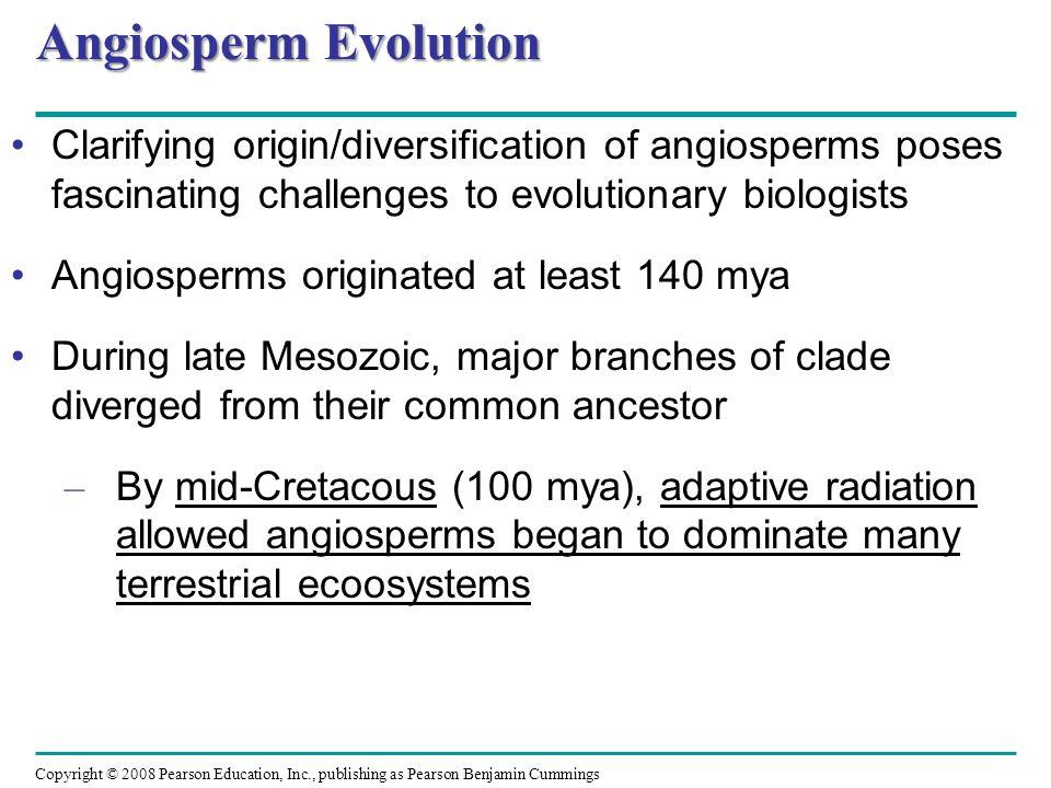 Angiosperm EvolutionClarifying origin/diversification of angiosperms poses fascinating challenges to evolutionary biologists.