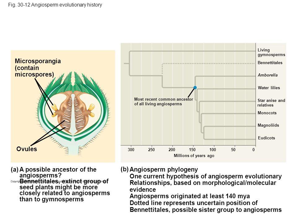 Microsporangia (contain microspores)