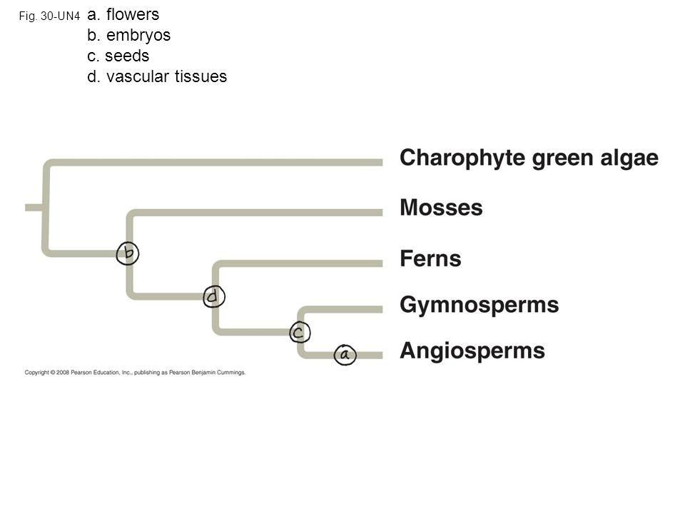 Charophyte green algae